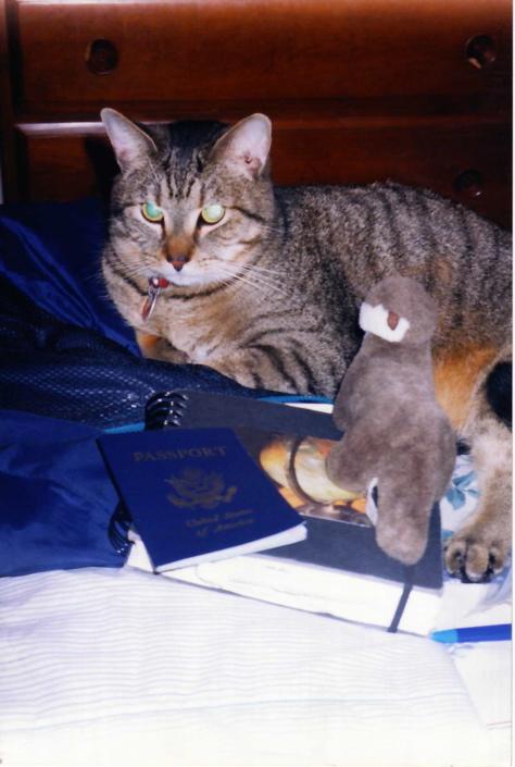 Travel still life with cat