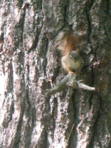 A squirrel perched on a small branch.