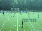 A sun shower makes the field sparkle.