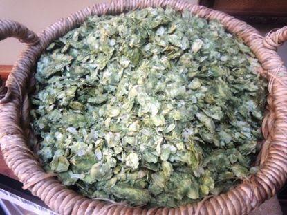 A basketful of hops.