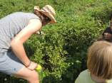 Our guide points out potato bugs