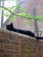 Kitty at Old North Church.