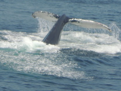 And a whale of a tail.