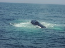 The whale's head.