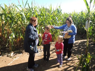 Lost in the maize.