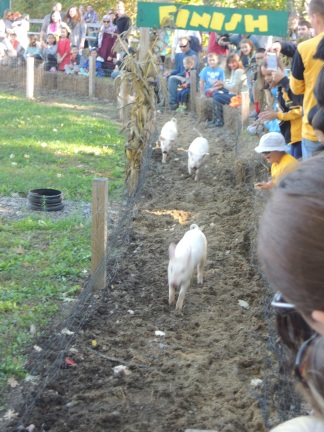 Pig race, photofinish.