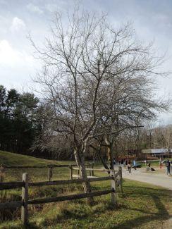 Barren trees.