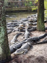 Endless gators.