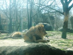 Dinari and Kamaia are very restful on their birthday.