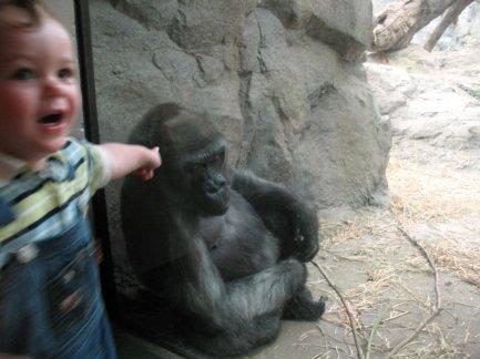 Zoo-4