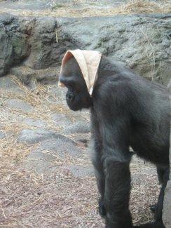 Zoo-5
