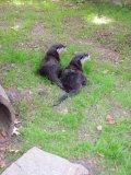 River otters awake
