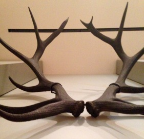 Decorative antlers from rural America.