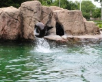 Sea lion spin