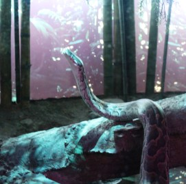bronx-zoo-25