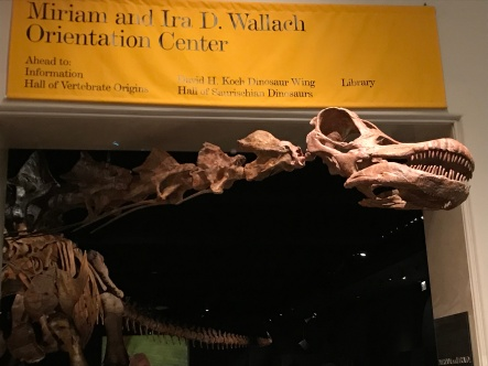 The titanosaur does not fit in one room.
