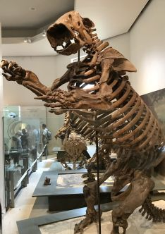 The scary giant ground sloth.