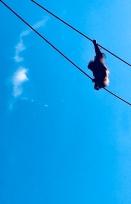 Orangutan X-ing.