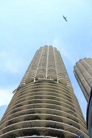 Marina City with seagulls.